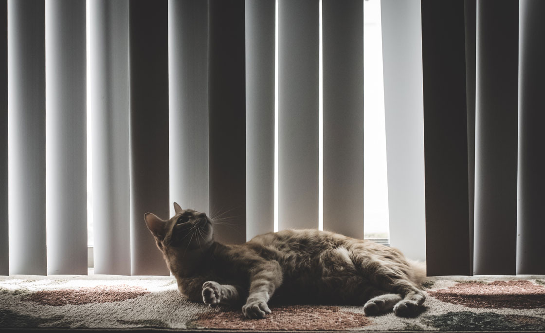 Vertical blinds hanging down behind cute cat